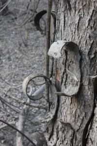 Curly bark